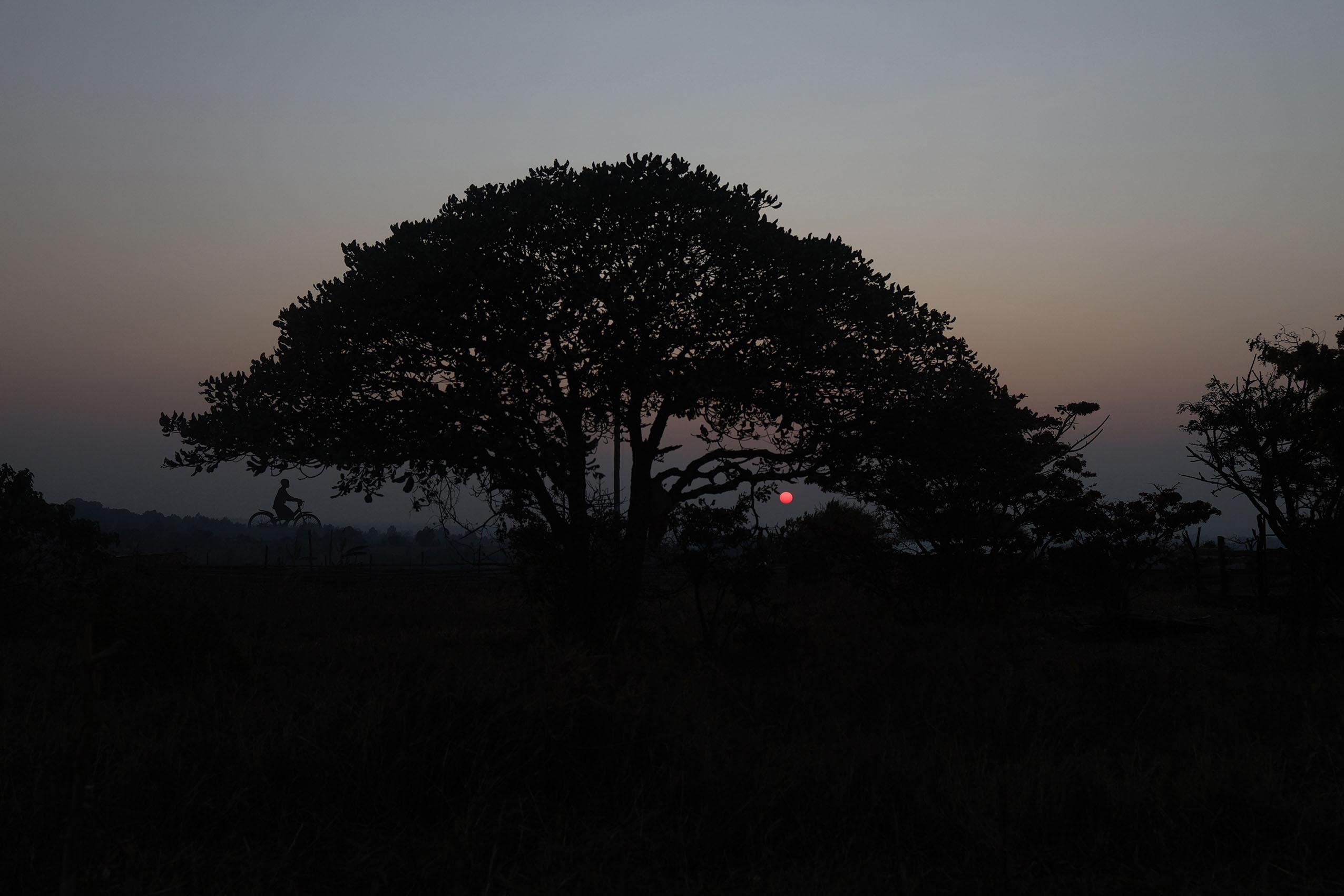 albero_pomerinialessandrotrovati